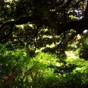 館林城跡の大木